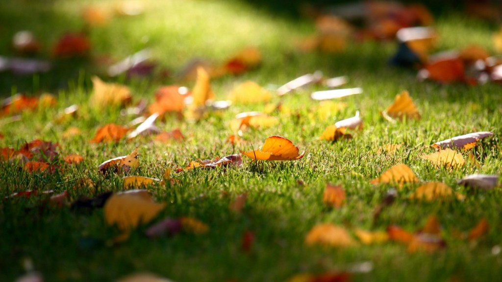 Fallen-Leaves-on-the-Grass-Wallpaper